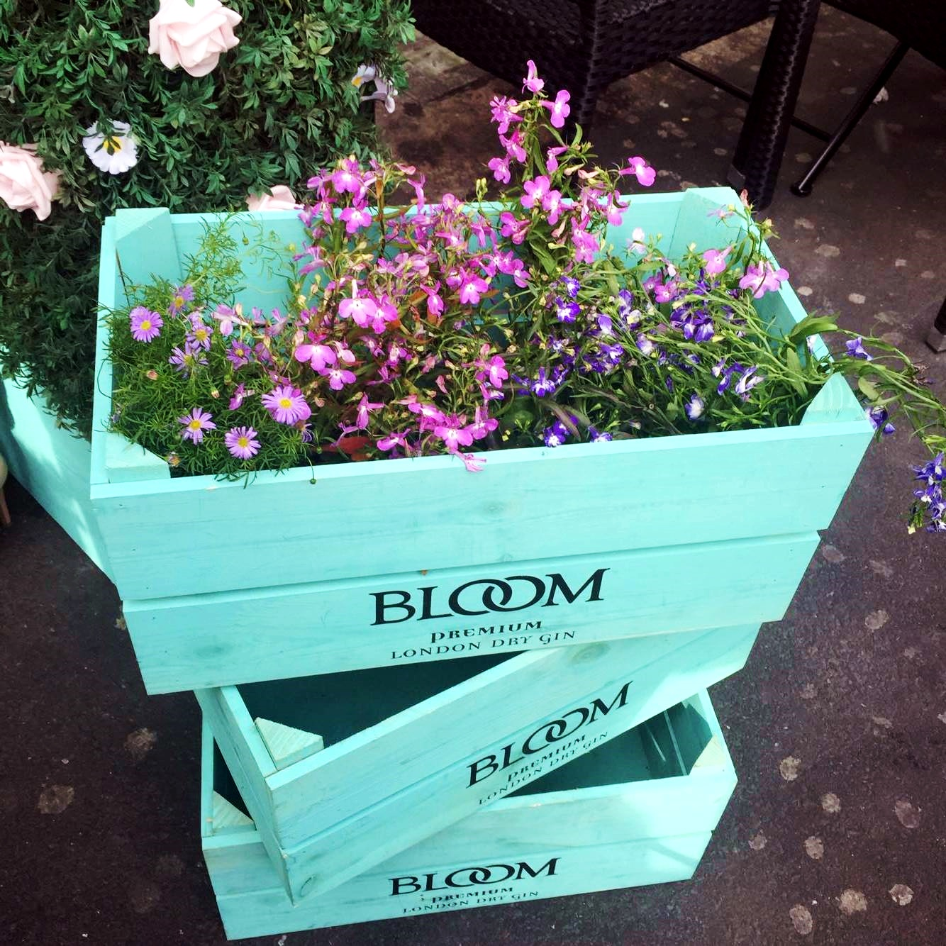 bloom gin terrace rosylee manchester