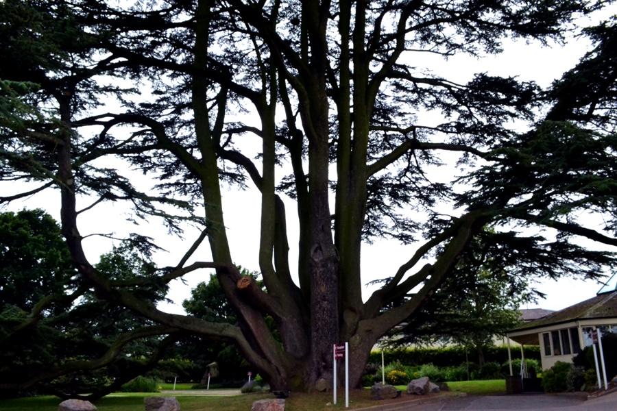 north the grange bristol tree