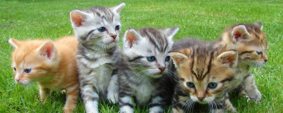 The 9 Emotional Stages of getting a Kitten