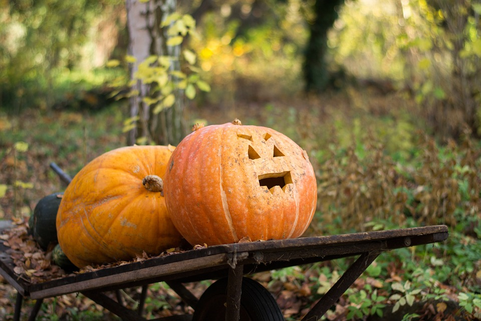 What to do for Halloween in Manchester 2016 pumpkin