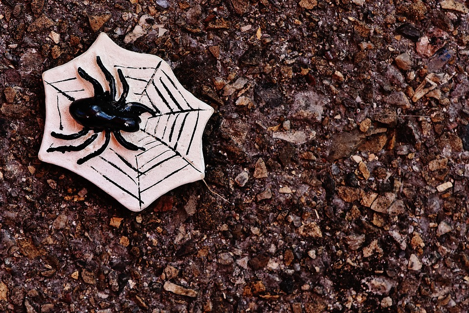 What to do for Halloween in Manchester 2016 spider