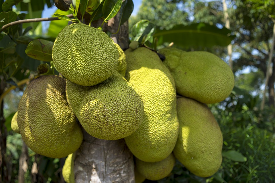 Jackfruit: The new Vegan alternative to meat for 2017