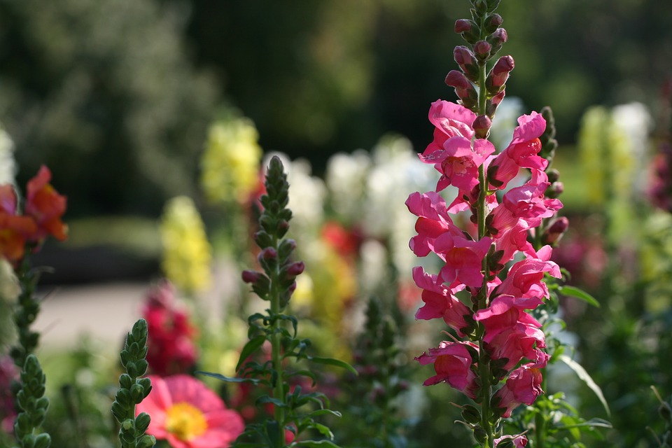Revealed: The UK's biggest Mother's Day Spenders snapdragons flowers
